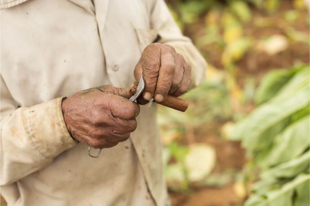 how to cut a cigar without a cigar cutter