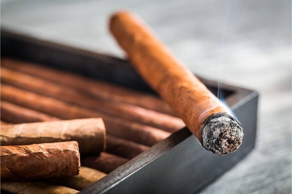 Cigar Beetles